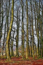 Woods by Bazz-photography