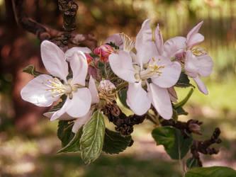 Sunny Flowers by MrBeholder