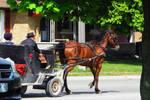 Rubber Wheel Mennonite Buggy by laurelrusswurm