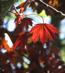 spring leaves by laurelrusswurm