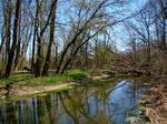 Springtime: Larch Creek by laurelrusswurm