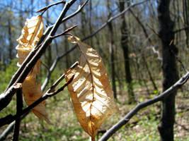 Autumn meets Spring by laurelrusswurm