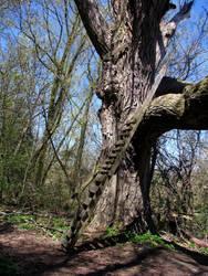 Tree House by laurelrusswurm