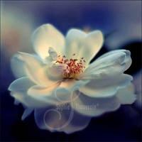 lady blue by prismes