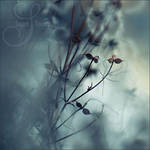 smooth winter II by prismes