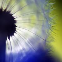 disco by prismes