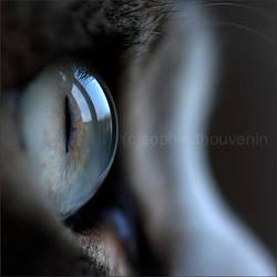 inside a dream by prismes