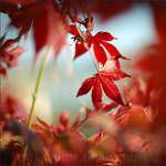 red wind by prismes