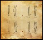 Study: The leg 3 by Shockowaffel