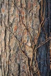 Trees in Vines by DJAmbrosino