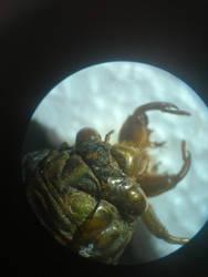 Cicada by Spottedleaf752