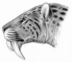 Smilodon by Biarmosuchus
