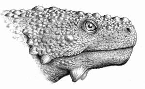 Deltavjatia vjatkensis by Biarmosuchus