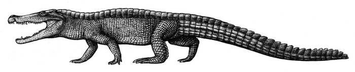 Goniopholis by Biarmosuchus