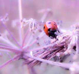 Ladybird by Samulipe
