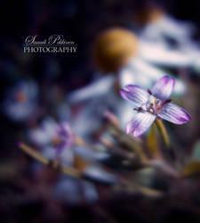 Meadow by Samulipe