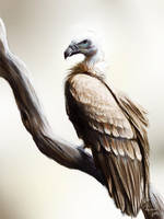 Daily Animal 6 - Griffon Vulture by DanjiIsthmus