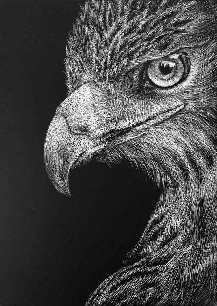 Bald Eagle Scratchboard by ninangame