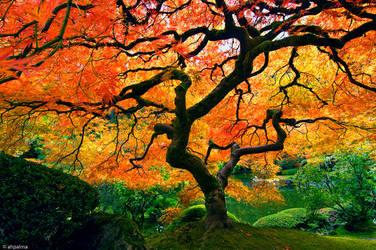 Beauty of nature by KumikoTsubaki