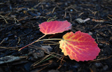 Leaves by jego0320