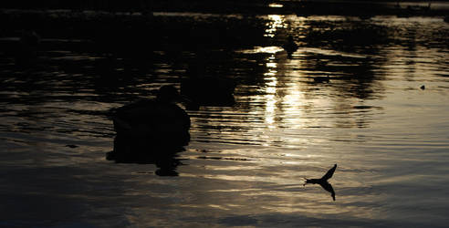 Autumn Ducks by jego0320