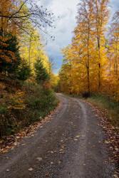 Forestry Trail by eegariM