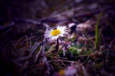 Daisy by MichisArt