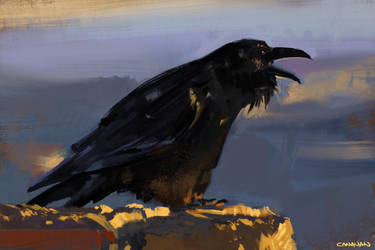 Raven Study by abigbat