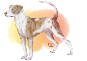 Catahoula Adopt 1 [CLOSED] by Unlikely-Adopts