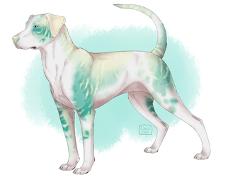 Sea Glass Catahoula Adopt [FLATSALE OPEN] by Unlikely-Adopts