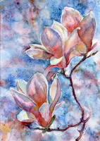 Magnolia Flower 1 by ShastinaHell-N