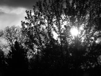 Nature Black and White by linqk57