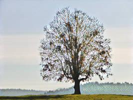 Tree 20180225 123726 by nevit