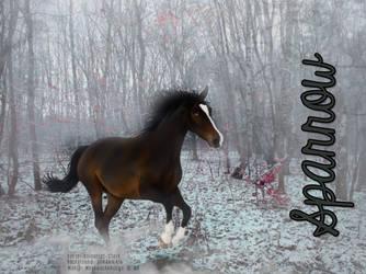Sparrow | Wild Equines by MegawackoRileyx