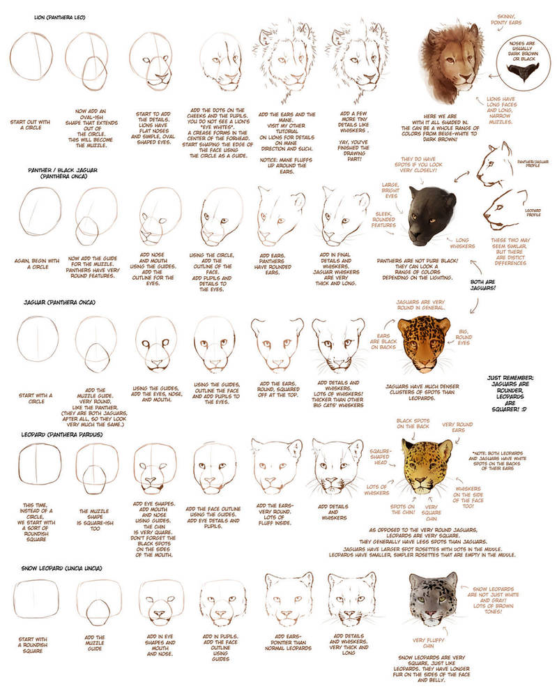OLD: How to Draw Big Cats Part 1 by TamberElla