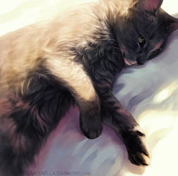 Soft Light by TamberElla