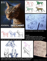Animal Sketching Tutorial by TamberElla