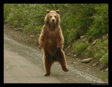 Dancing Bear by LanimilbuSx