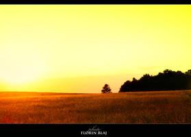 Sunny Fields by FlorinBlaj