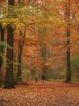 Late fall walk by Narkya