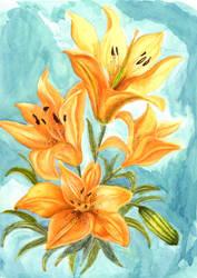 Lillium Bulbiferum Variatio Croceum by davidgil-illustrator