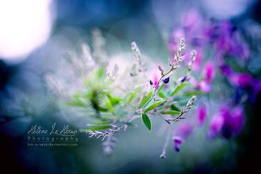 la magie de la nature by kim-e-sens