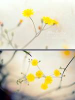 Reflected little suns by kim-e-sens