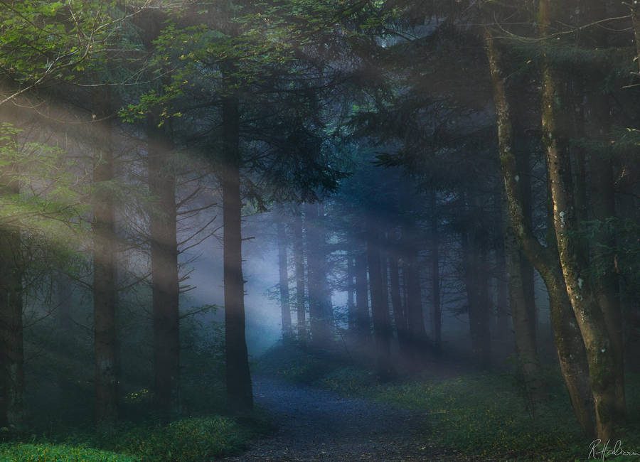 Fairy Path by RobinHalioua