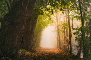 Journey by RobinHalioua