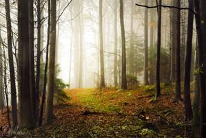 Late Autumn by RobinHalioua