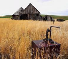 Rye Grass by TRunna
