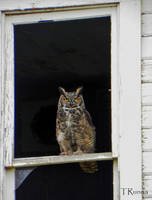 Great Horned Owl by TRunna
