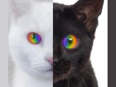 Rainbow-Eyed Cats Photoshop by N-O--V-A