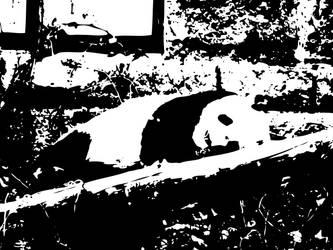 Pandaaa by sushinam